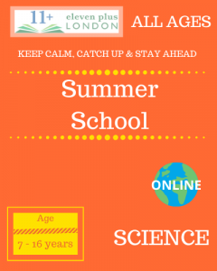 Summer school: SCIENCE
